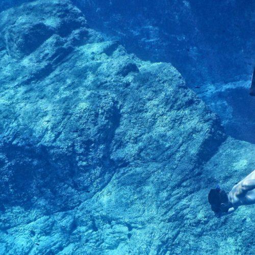 onderwatercamera's techbird