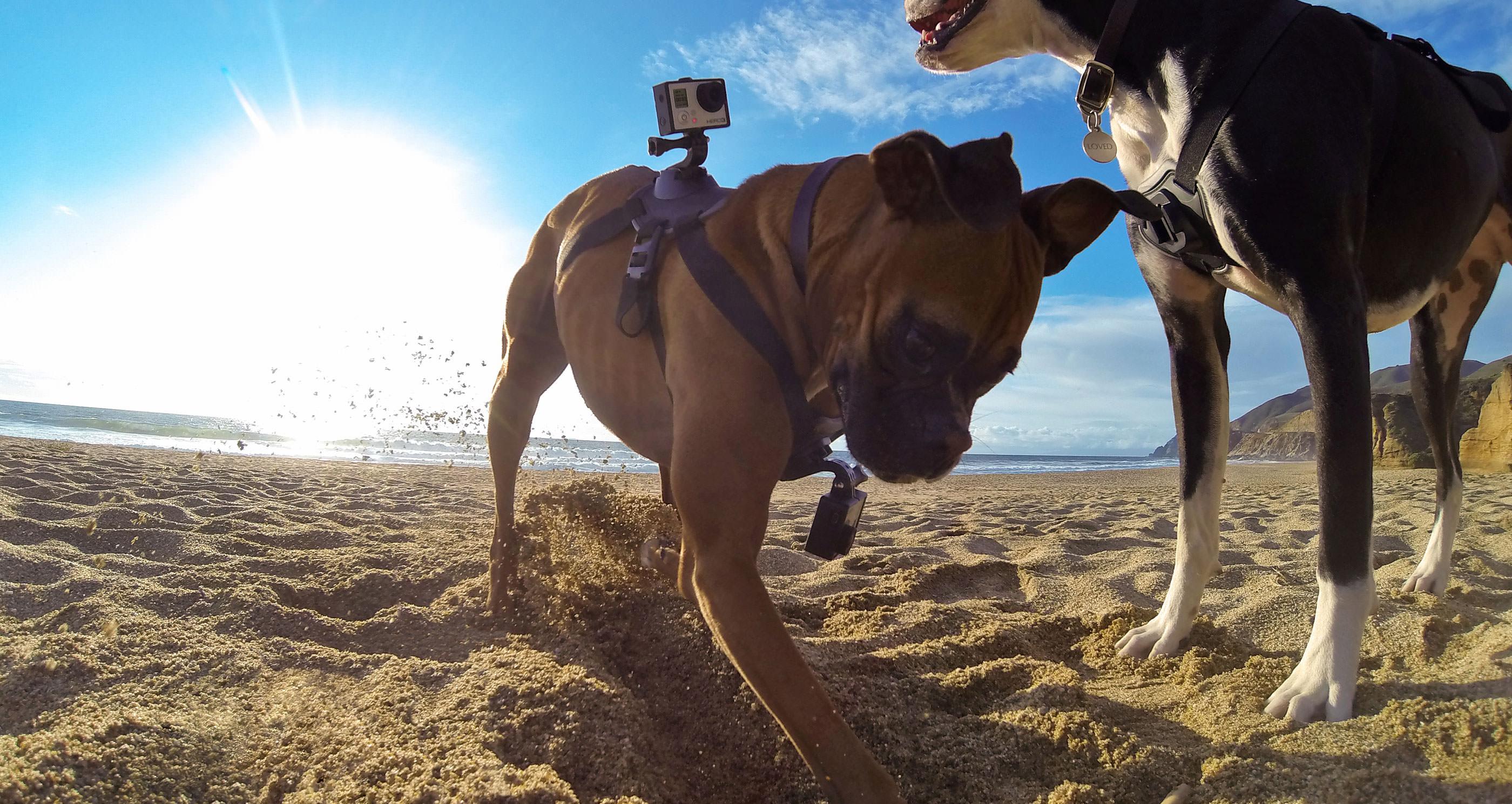 GoPro voor honden. Techbird Gadgets