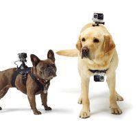 De drie beste gadgets voor katten en honden techbird.